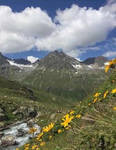Arnika na stráních v nadmořské výšce nad 2 000 m